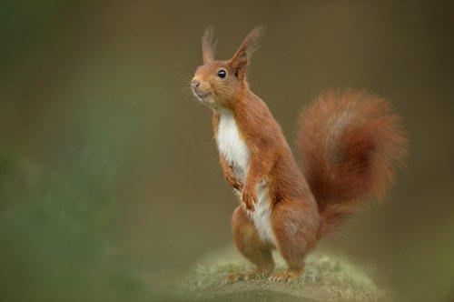 Милые звери из голландского леса (13 фото)
