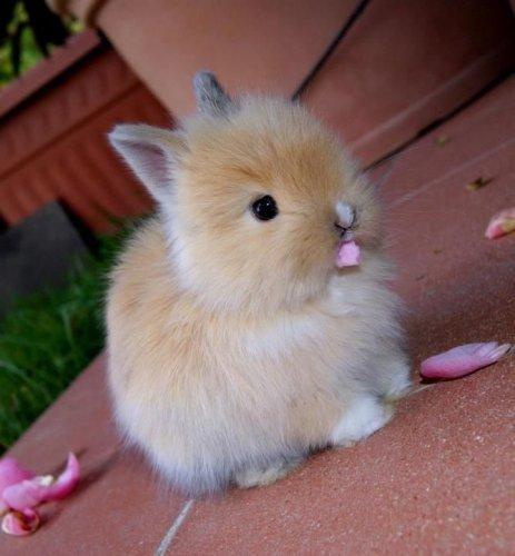 Смешные и забавные кролики (35 фото)