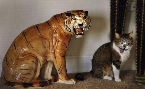 Снимки котов, сделанные в нужный момент (18 фото)