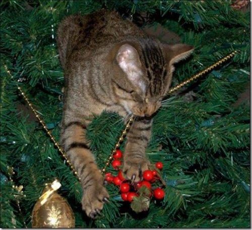 Коты и ёлка: непростые отношения… (64 фото)