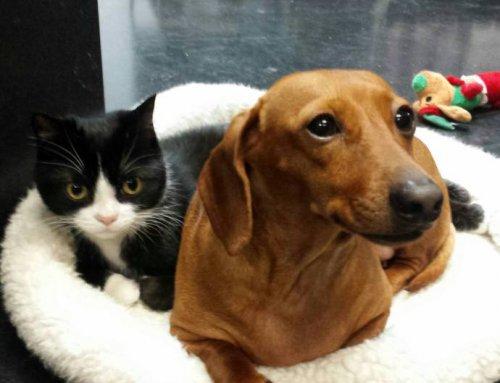 Дружба собаки с кошкой растрогала зрителей YouTube