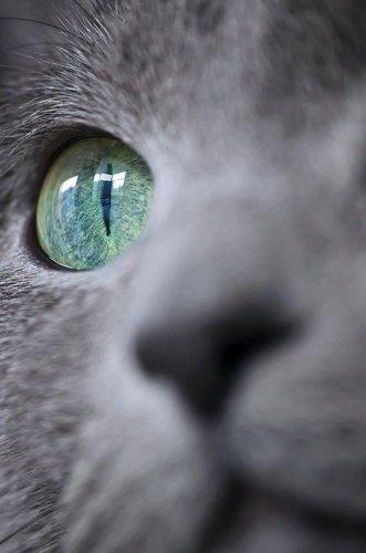 Автопортреты животных - новое интернет-увлечение (13 фото)