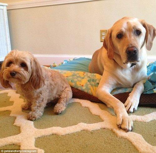 Парочка очаровательных псов стали звездами Instagram (11 фото)