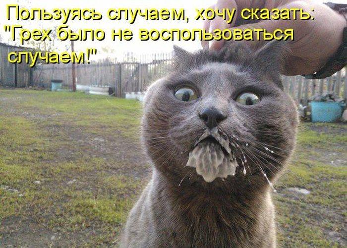Днем энергетика, кот и сметана картинка смешная