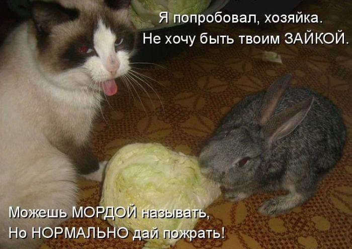 Прикольные картинки зайцев с надписями, моя