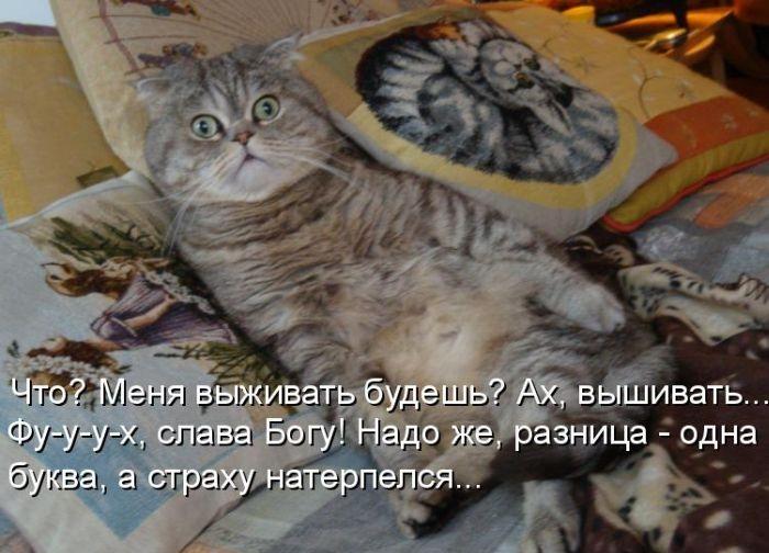 Смешные картинки про кошек и подписи, день