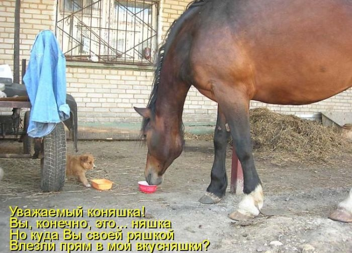 Картинки с надписями с лошадьми, корабля анимашка поздравления