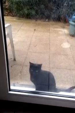 Юмор: Пустите кота в дом!