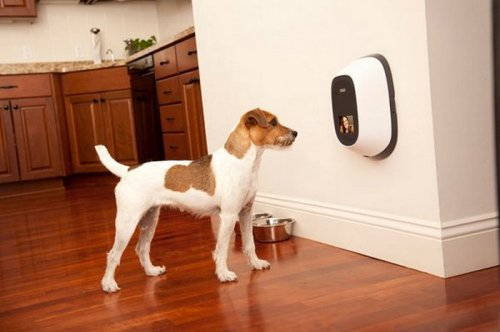 Видеотелефон для домашних любимцев (3 фото)