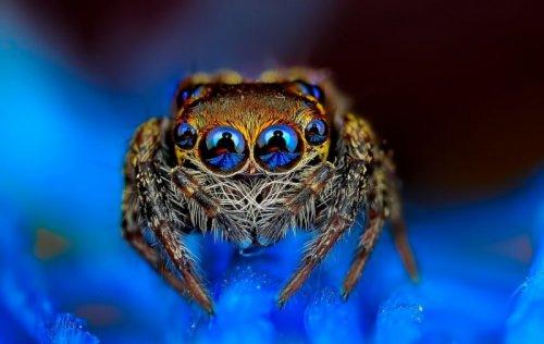 Макрофотографии экзотических пауков (11 фото)