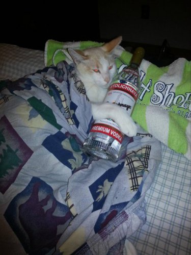 Коты-гангстеры (18 фото)