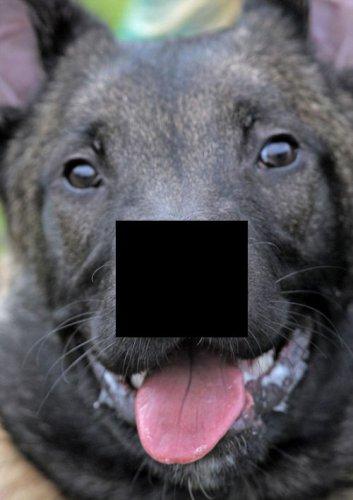 У собаки двойной носик (10 фото)