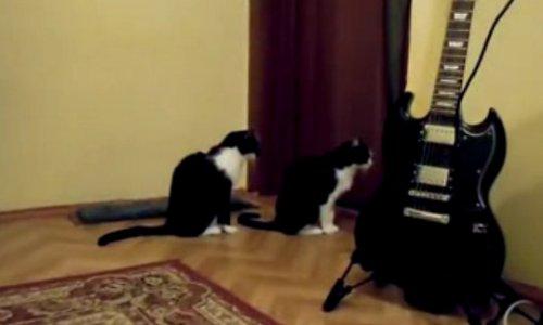 Юмор: Ох уж эти кошки