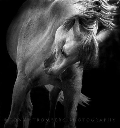 Лошади от фотографа Tony Stromberg (21 фото)
