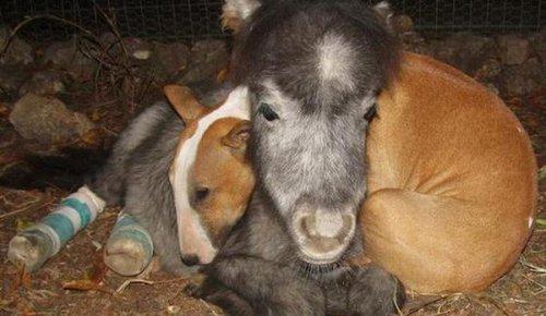 Спасенные животные в приюте стали самой невероятной семьей  (24 фото)