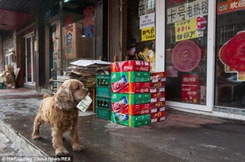 Пёсик, который знает цену деньгам (9 фото)