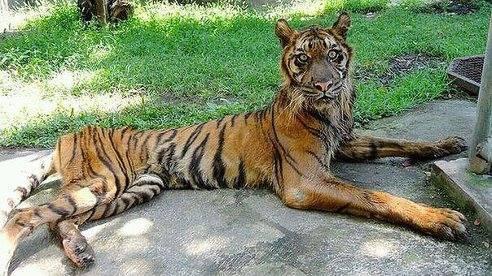 В украинском зоопарке голодают животные