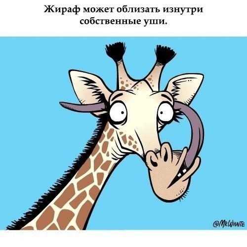 Факты о животных (10 фото)