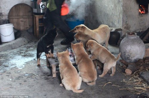 Очаровательные щенки ютятся вокруг огонька! (5 фото)