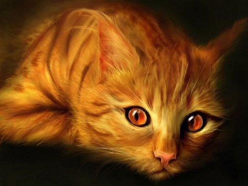 О взаимоотношения человека с кошкой