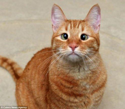 Косоглазый кот Джарвис (7 фото)