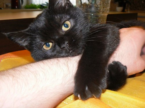 Владельцы кошек застенчивые одиночки, говорят учёные