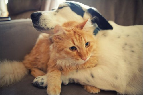Котейки и пёсики (31 фото)