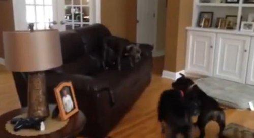Юмор: Собачья радость