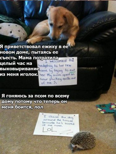 Собачьи мысли вслух (26 фото)