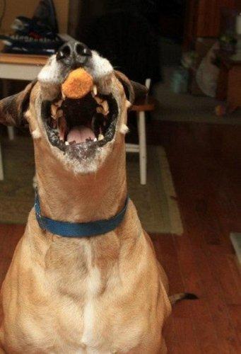 Юмор : Забавная собака (6 фото)