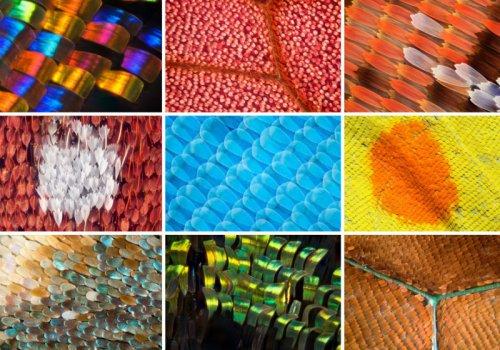 Крылья бабочек в макрофотографиях (12 фото)