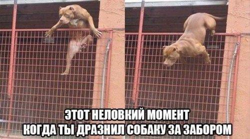 Не дразните собак на привязи