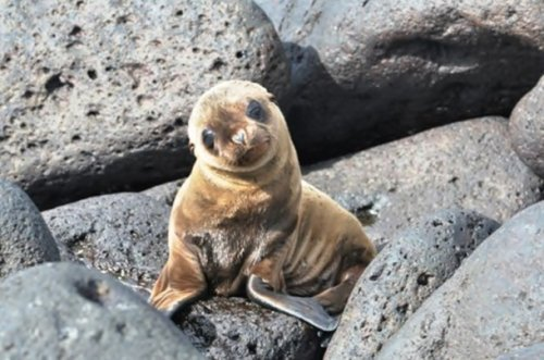 Прелестные детёныши животных (25 фото)
