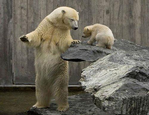 Смешные и забавные медведи (33 фото)