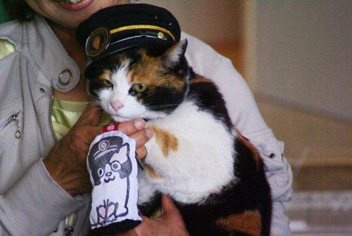 В Японии живёт кошка-смотритель железнодорожной станции (3 фото)