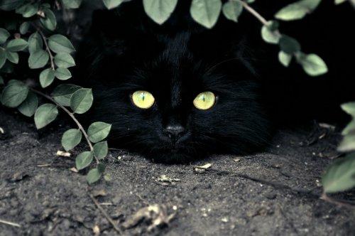 """Истории, которые делают нас лучше: """"Про кота Васю"""""""