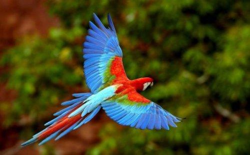 Притча о любви: Женщина и птица