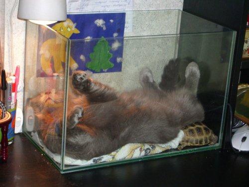 Юмор :Спящие коты
