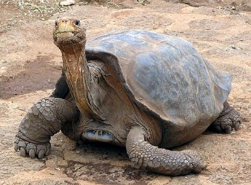 Самое долгоживущее животное (3 фото)