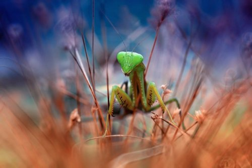 Красивые образы маленьких насекомых (13 фото)