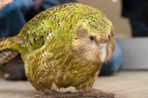 Птица-долгожитель (3 фото)