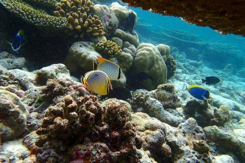 Фантастический подводный мир Бананового рифа (8 фото)
