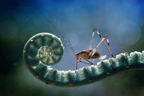 Макрофото насекомых (17 фото)