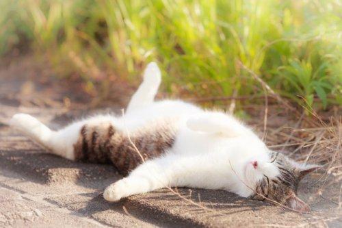 Всем любителям кошек посвящается (19 фото)