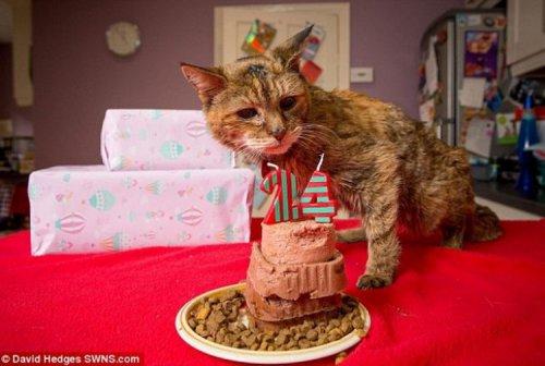 Котейка долгожитель (5 фото)