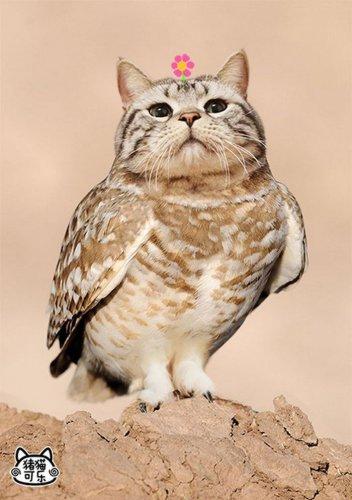 Meowl — гибрид кошки и совы (9 фото)