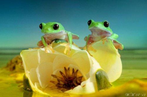 Лягушки-симпатяжки (19 фото)