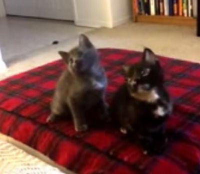 Юмор : Музыкально-танцевальные котейки