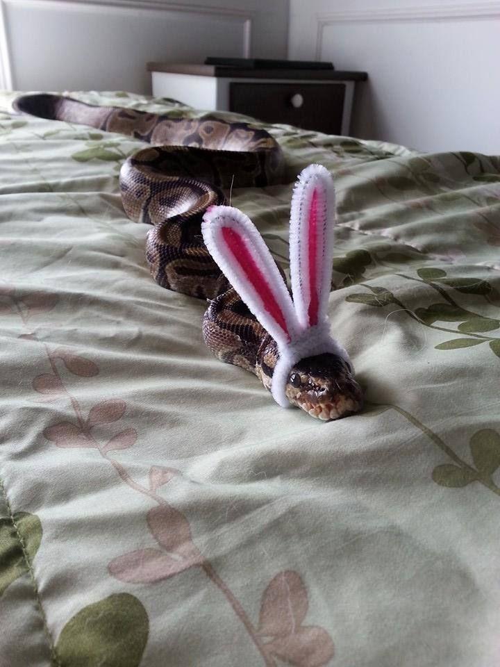 змея с ушами зайца картинка как когда-то