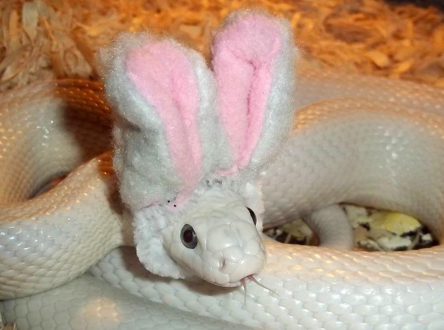 Змея в картинках смешные, своими